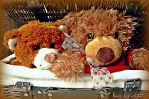 teddybasket signed